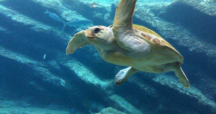 turtle-1202692_1920